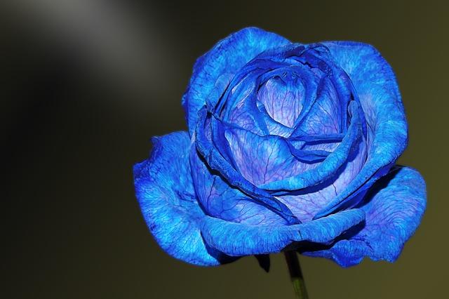 hoa hong xanh y nghia
