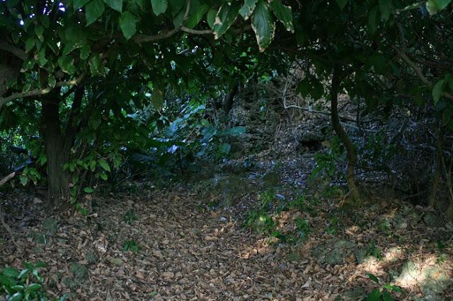 米須集落の写真