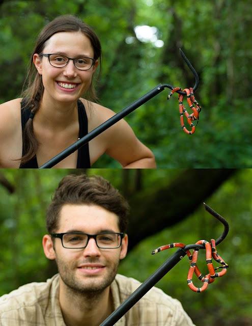 3 piece breakdown snake Field Herping hook