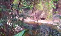 India destina mas 6 mil millones de dolares para crear nuevos bosques