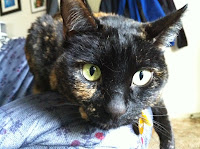 Polly Stogdill, Tortoiseshell Kitty Extraordinaire