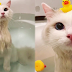Cara Memandikan Kucing Ala Salon di Rumah Sendiri