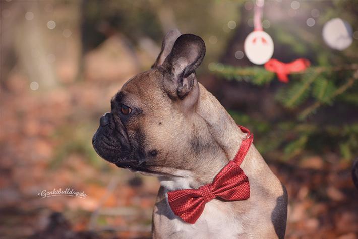 Französische Bulldogge Weihnachten Weihnachtsgrüße Garte Bild Bully Hund Frenchie XMas