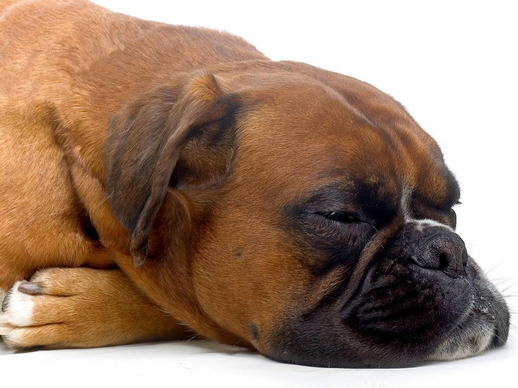 curación colitis en perros