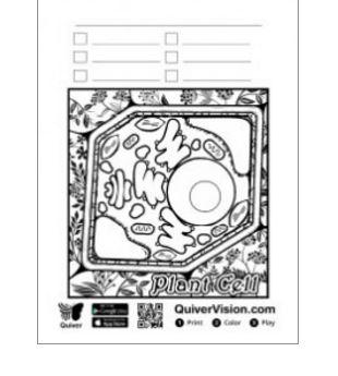 Ezgi Aydoğdu Quiver 3d Coloring App Uygulamasi