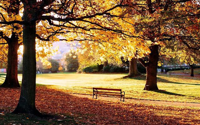 Herfst in het park met een bankje en herfstbladeren op de grond