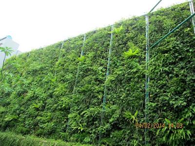 Tukang taman vertikal surabaya1