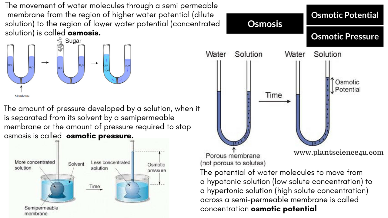 Osmosis  Osmotic pressure and Osmotic potential