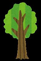 木の成長過程のイラスト6