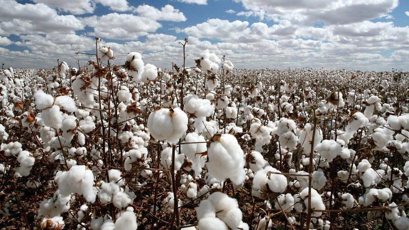 Ο Πέτροβιτς ζητά παρέμβαση του Υπουργού Αγροτικής Ανάπτυξης για τις ζημιές στις βαμβακοφυτείες του Έβρου