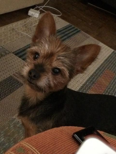 O meu cão Isaac