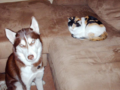 The Leave It command enabled my dog and cat to stay in the same room together!