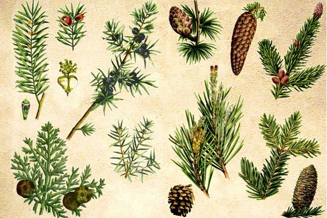 Kelompok Jenis-jenis Tumbuhan Berbiji (Spermatophyta)