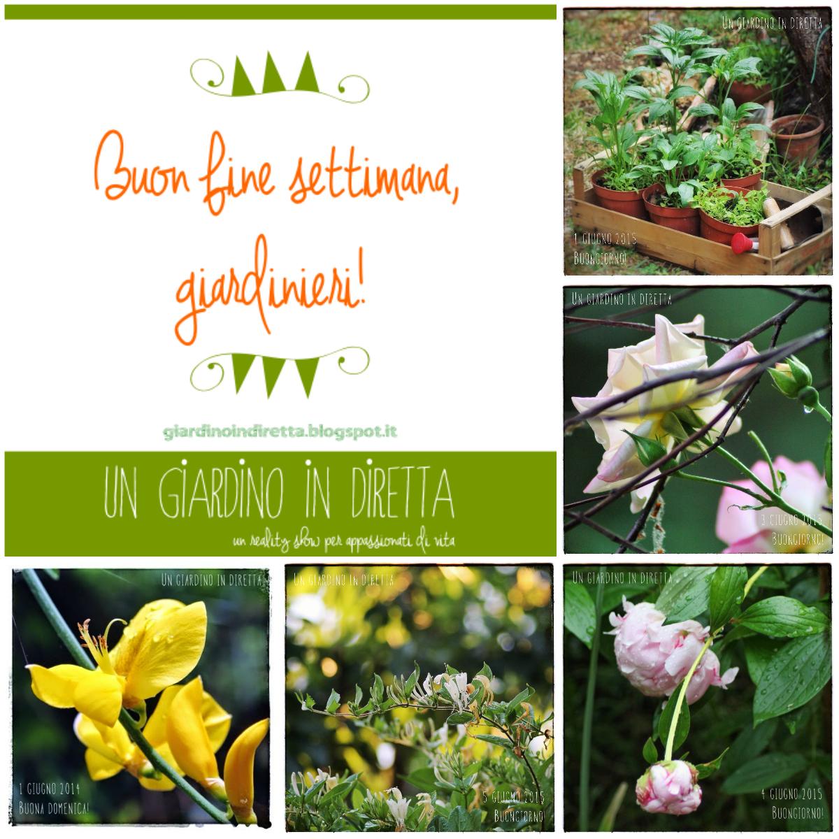 Buon Fine Settimana Giardinieri Un Giardino In Diretta