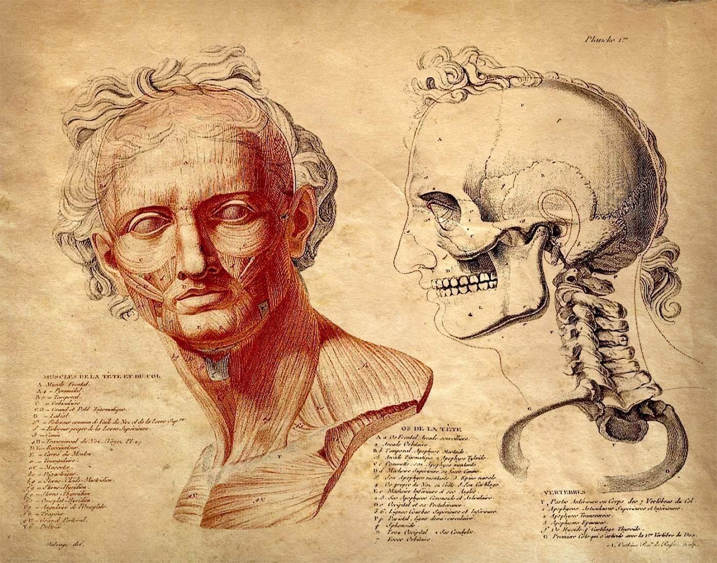 Vintage Anatomical Drawing HCV New Drugs: ...