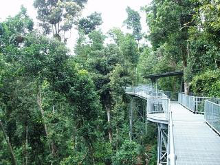 Canopy Walk Forest in Malaysia