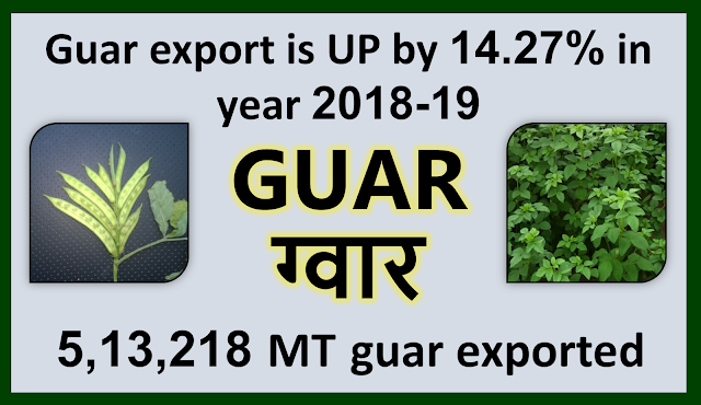 Guar export has increased by 14.27% in year 2018-2019, Guar, guar gum, guar price, guar gum price, guar demand, guar gum demand, guar seed production, guar seed stock, guar seed consumption, guar gum cultivation, guar gum cultivation in india, Guar gum farming, guar gum export from india , guar seed export, guar gum export, guar gum farming, guar gum cultivation consultancy, today guar price, today guar gum price, ग्वार, ग्वार गम, ग्वार मांग, ग्वार गम निर्यात 2018-2019, ग्वार गम निर्यात -2019, ग्वार उत्पादन, ग्वार कीमत, ग्वार गम मांग, Guar Gum, Guar seed, guar , guar gum, guar gum export from india, guar gum export to USA, guar demand USA, guar future price, guar future demand, guar production 2019, guar gum demand 2019