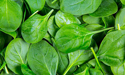 Electricity and Hydrogen Produced By Cells in Spinach