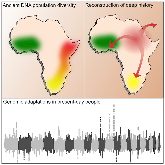 Ancient human DNA in sub-Saharan Africa lifts veil on prehistory