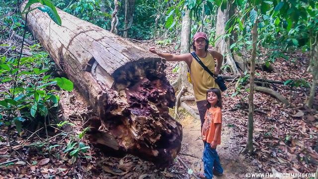 ver-orangutanes-en-borneo-sepilok-trekking-por-la-selva