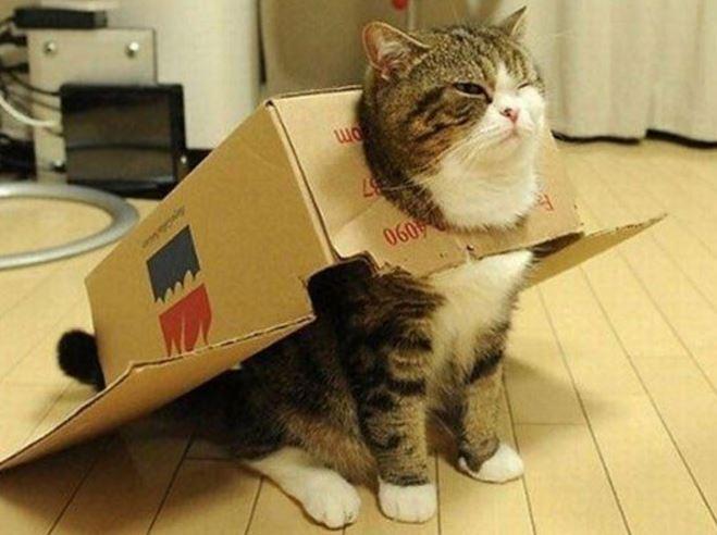 carton et chat 32