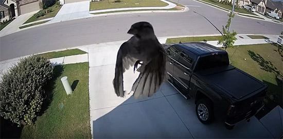Vídeo de pássaro levitando - Img 1