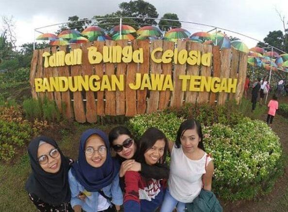 Spot Foto Keren Di Taman Bunga Celosia Bandungan Semarang