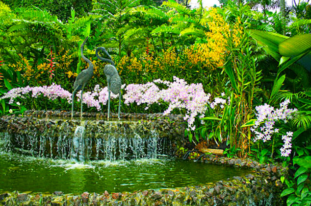 Orchid Garden in Singapore (1)