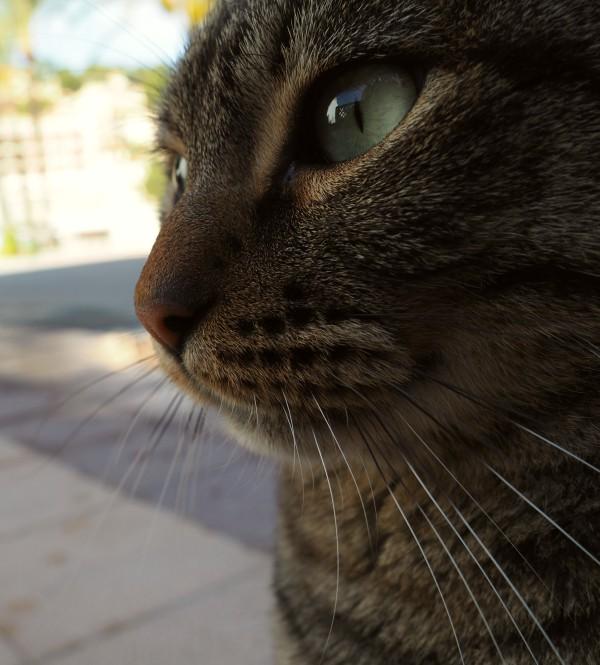 port de soller cats