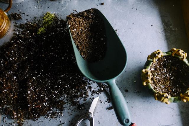 Grow Your Own Salad At Home I Salad Bowls & Urban Gardens