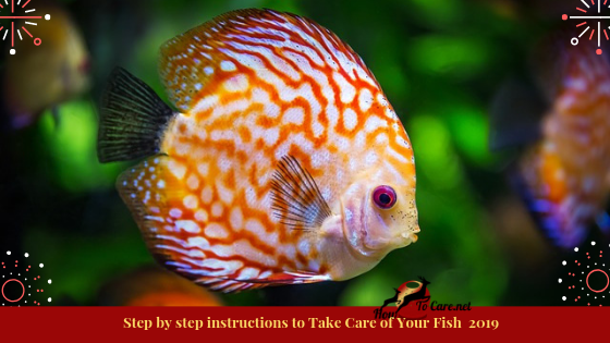 Regardless of whether you are a tenderfoot or a specialist, there are a couple of nuts and bolts of fish proprietorship that are critical to pursuing.