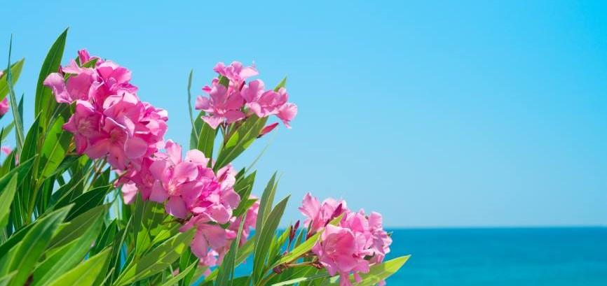 10 Arbustos Con Flor Para El Jardin Amigos De La Jardineria - Arbustos-de-flor