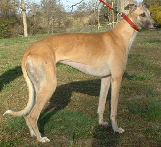Dog Breed Directory With Pictures