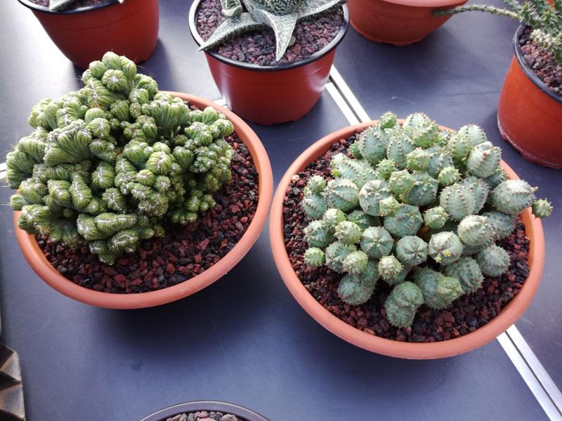 Plantas Rusticas