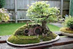 Memberi Makan Pohon Bonsai Anda