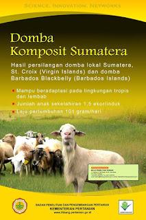 domba komposit sumatra