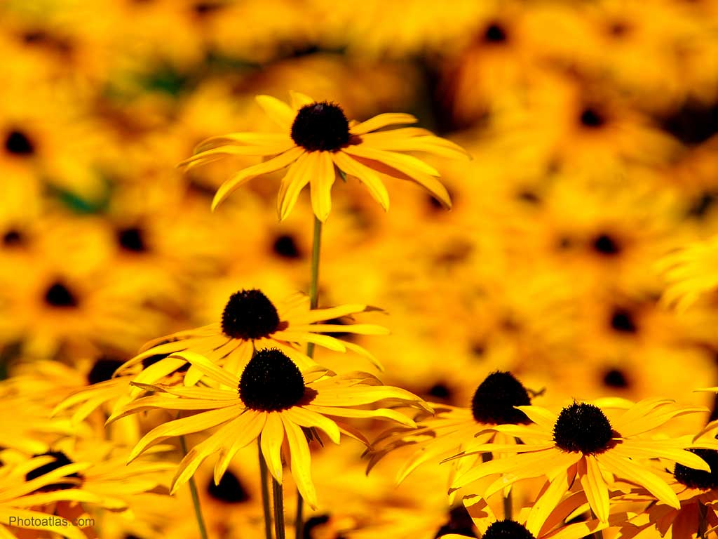 yellow flower backgrounds - photo #13