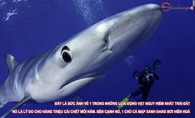 Xin đừng giết hại động vật: Con người là chúa tể vạn vật
