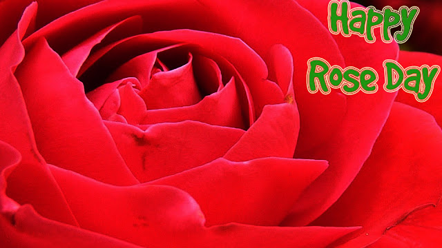 Happy-rose-day-wallpaper-HD