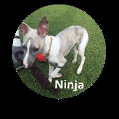 My dog Ninja