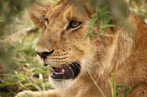 safari-fotografico-leon