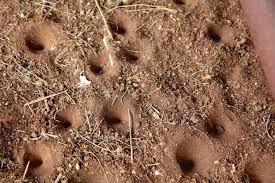 lubang semut