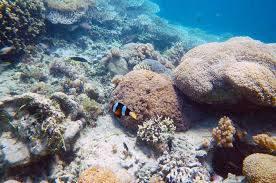 View snorkling Pulau Moyo