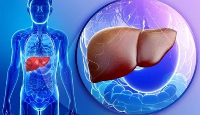 bersihkan racun dari Liver
