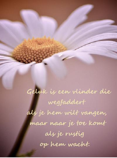happinez spreuken geluk Geluk is als een vlinder  happinez spreuken geluk