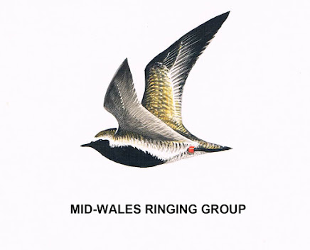Mid Wales Ringing Group