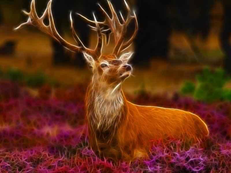 Beautiful Frog Wallpaper Download for free beautiful deer animals