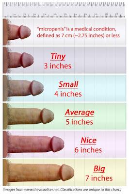 Average Pussy Size 116