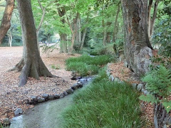 下鴨神社・糺の森