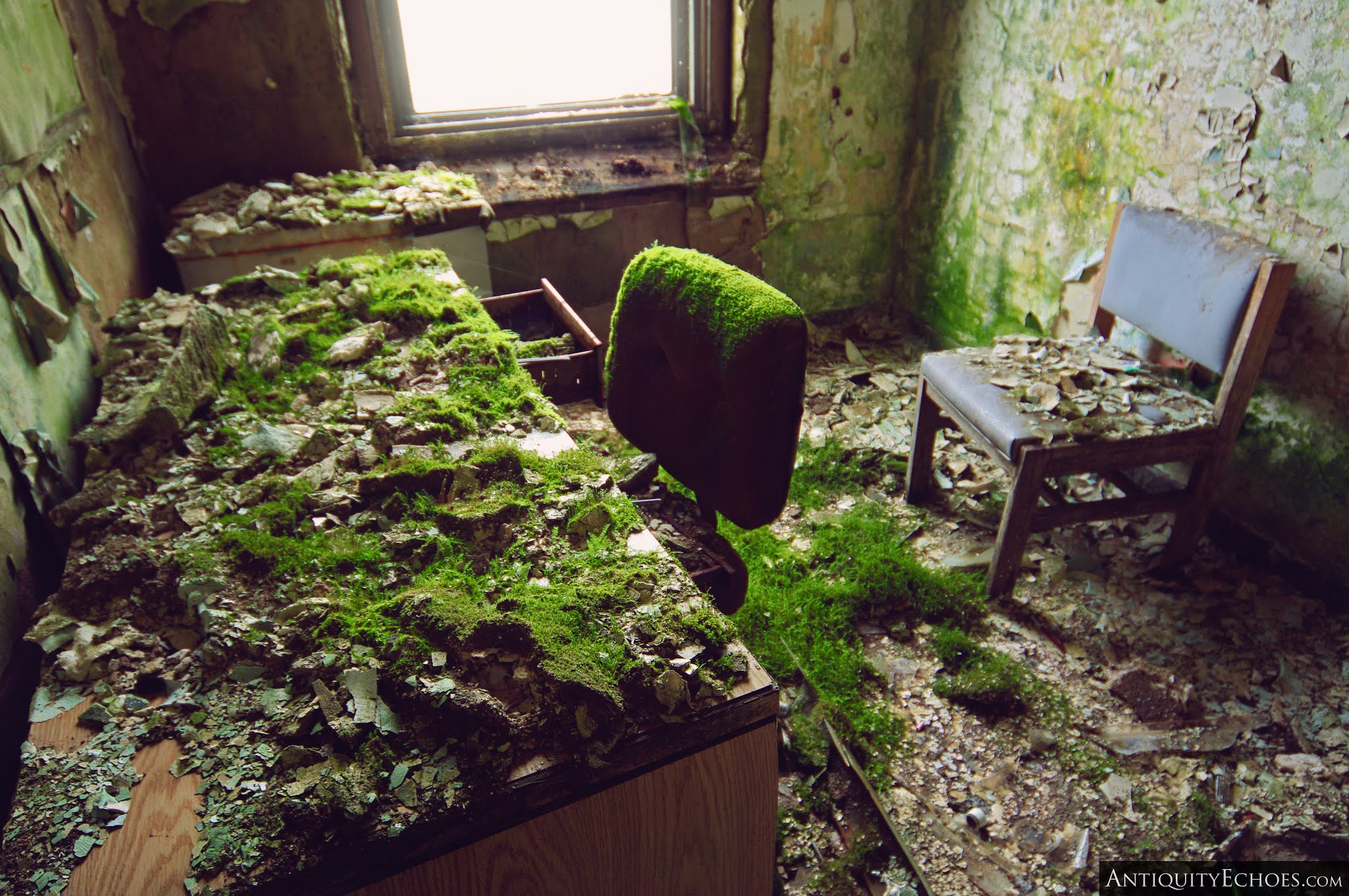 Overbrook Asylum - Moss Covered Office